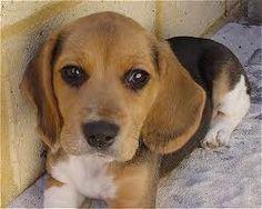 CachorrosBlogs.: Cachorros - Horror e Agonia.