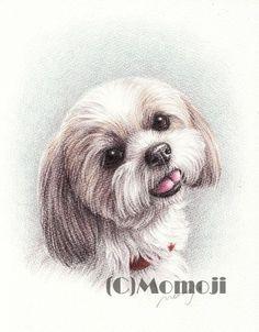 http://www.momoji-ya.com/ shih tzu draw
