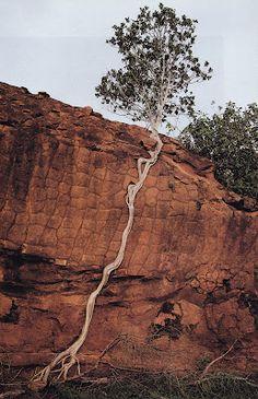 Tree climbing up Rock