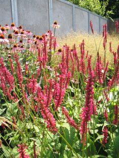 Persicaria amplexicaulis - Duizendknoop | De Tuinen van Appeltern East Facing Garden, Hippie Garden, Prairie Garden, Garden Borders, Colorful Garden, Flower Beds, Garden Projects, Garden Ideas, Amazing Gardens