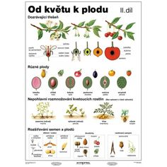 od květu k plodu Funny Pictures For Kids, Funny Quotes For Kids, Jokes For Kids, Annoying Kids, Autumn Activities For Kids, Elementary Science, Exercise For Kids, School Humor, Teaching Materials