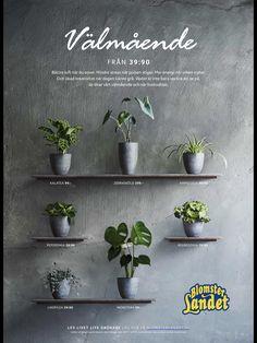 Planter Pots, Garden, Garten, Gardening, Outdoor, Home Landscaping, Tuin, Gardens, Plant Pots