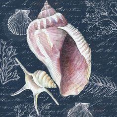 Shells ~ by Elena Vladykina