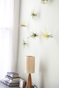 tillandsia on the wall - what a clever idea!