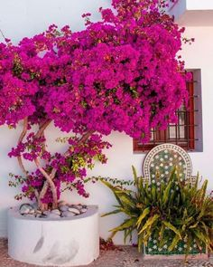 Pretty in pink 💕 Mundo Design, Spanish Colors, Veranda Magazine, Shabby Chic, Miguel Angel, Beaches In The World, World Of Color, Outdoor Landscaping, Bohemian Decor