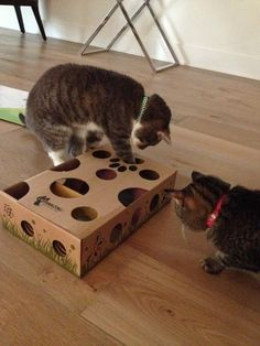 Cat Amazing - Best Cat Toy Ever! Interactive Puzzle Box Game for Cats:       Interactive cat toy - game & puzzle - for cats!     Encourages natural instinct to explore, sniff, search and retrieve hidden rewards     Three levels to stimulate & challenge cats as their skills improve     Works with their favorite treats & small toys     Makes a great gift!