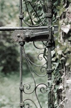 Gate and Ivy by ~Northern-Moon