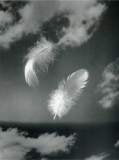 Andreas Feininger:(when you see a feather there is an angel close by) Studies of the Structure of Natural Objects. Thank you, firsttimeuser.