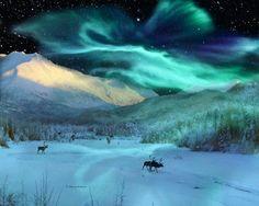 "♥ ""Alaska Aurora Caribou Herd"" by Dianne Robertson"