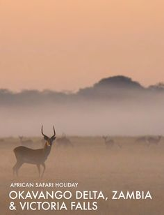 African Safari Tours Okavango, Victoria Falls and Kafue Safari Holidays, Okavango Delta, Safari Adventure, Victoria Falls, African Safari, Tours, Parks, Animals, Animales