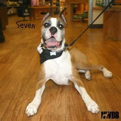 """Seven: """"My forever family found me & it's a big one! Thanks, NWBR!"""