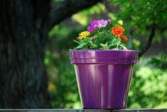 Cómo plantar flores