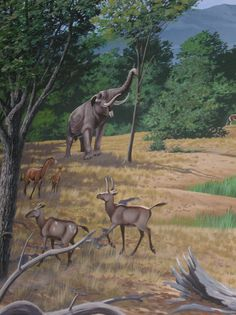 Part of a mural depicting life in the John Day basin 15 million years ago. Show are the deer Dromomeryx, the horse Merychippus, and the four tusk mastodont Gomphotherium.
