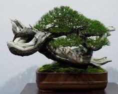 bonsai bonsai pinterest sortieren japanische und pflanzen. Black Bedroom Furniture Sets. Home Design Ideas