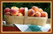 All Recipes with Peaches - a Website devoted entirely to recipes with peaches!!