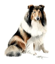 COLLIE Dog Art Print Signed by Artist DJ Rogers by k9artgallery, $12.50