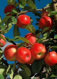 L'art Du Fruit, Eat Fruit, Fruit Art, Fruit And Veg, Fruit Trees, Fruits And Vegetables, Trees To Plant, Fresh Fruit, Fruit Drinks