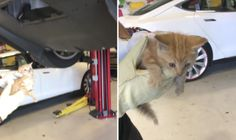 A tiny kitten is seen after being pulled out of a Tesla car in which it had become stuck.