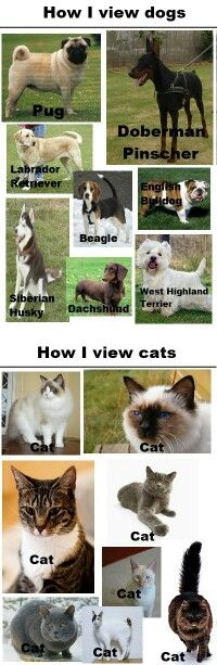That is how i view cats