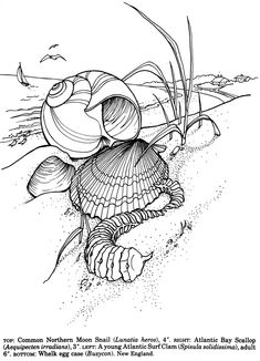 Welcome to Dover Publications Shells of the World Coloring Book