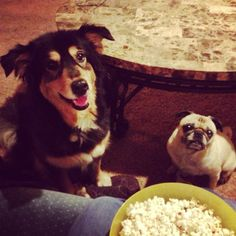 Make a bowl of popcorn, and they will come.