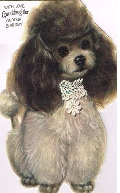 1970's Poodle Card
