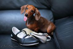 Greta has a taste for shoes.