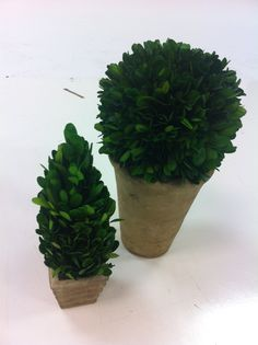small rustic plants