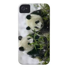 Giant Panda Cubs in Snowfall iPhone 4 Case-Mate Case