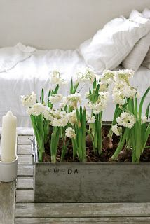 lovely paperwhites