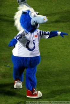 Blue- Indianapolis Colts mascot Morgan loved him! Indiana Football, Best Football Team, Football And Basketball, American Football, My Boy Blue, Go Blue, Colts Cheerleaders, Team Mascots, Peyton Manning