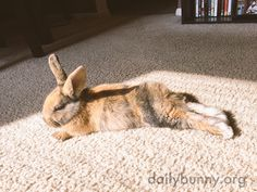 Bunny basks in a sunbeam - October 1, 2017