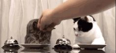 Did you watch it? Did you SEE the beauty in their impatient little paws?