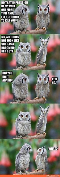 Everybody Has Their Owl Problems
