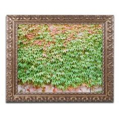Trademark Fine Art 'Ivy Wall' Canvas Art by Ariane Moshayedi, Gold Ornate Frame, Size: 16 x 20, Multicolor