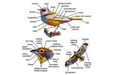 10 Tips For Watching Birds In Wildlife