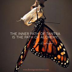 """""""The inner path of Tantra is the path of alchemy."""" - Lisa Sanchez-Holmes - """"The inner path of Tantra is the path of alchemy."""" """"The inner path of Tantra is the path of alchemy."""