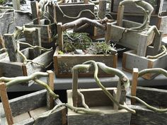 † Handmade Twig Trugs from Whitbey Island - all with rough, rustic branch handles. the blogger used one of these for a miniature garden - blog is all about mini gardens (i have tutorial to make these boxes on another pin on twig craft board)