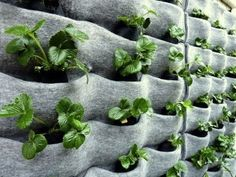 """Florafelt Pocket Garden    Constructed using the florafelt planters produced by """"Plants On Walls"""""""
