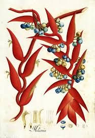 A bilingual painting and how the Huntington's 'Visual Voyages' changes the story of art and science Granada, Huntington Library, Drawing School, Germany And Italy, Nature Drawing, Fauna, Botanical Illustration, Natural History, Printmaking