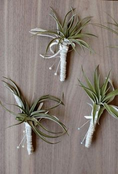 Aren't a fan of flowers? Go for succulents, greenery or air plants! Air plants are perhaps the most uncommon way to rock plants on your big day and they ...