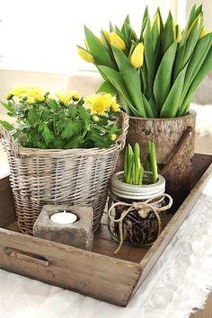 Love the daffodil/crocus bulb growing in a mason jar!