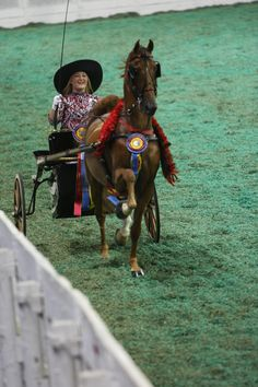 MBA's Royal Shadow Phax, an American Saddlebred Pleasure Driving Horse Horse Wagon, Horse Cart, Work Horses, Show Horses, Beaded Dog Collar, All Breeds Of Dogs, Ashley Walters, Horse And Buggy, Morgan Horse