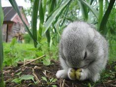 cute animals 7 Daily Awww: Animals rock! (33 photos)