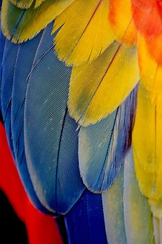Macaw Wing Feathers by PuppiesAreProzac, via Flickr