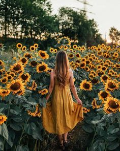 Sunflower fields 🌻 by . … Sunflower fields 🌻 by . … Sunflower fields 🌻 by . Sunflower Feild, Sunflower Field Pictures, Pictures With Sunflowers, Sunflower Pics, Picture Poses, Photo Poses, Sunflower Field Photography, Shotting Photo, Sunflower Wallpaper