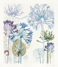 TROWBRIDGE - Amanda Ross Agapanthus Wood - These exquisite wild flower prints are by the English artist Amanda Ross. Amanda takes her in. Watercolor And Ink, Watercolor Flowers, Motif Tropical, Decoupage, Stencils, Fruit Painting, Shabby, Plant Drawing, English Artists