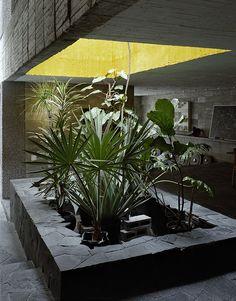 La maison en beton de Pedro Reyes a Mexico Au centre de la pièce à vivre, un puits de lumière éclaire un parterre de plantes. La couleur jaune est un clin d'œil à l'architecte mexicain Luis Barragán.