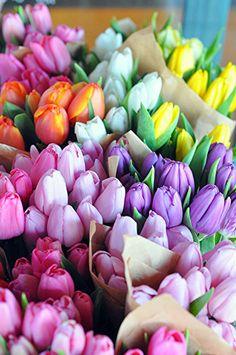 Tulip heaven!