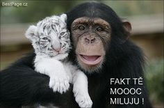 Best of friends - monkey and little baby tiger, cute pets and loving animals Baby White Tiger, White Tiger Cubs, White Tigers, Amor Animal, Mundo Animal, Animal Hugs, Baby Animals, Funny Animals, Cute Animals